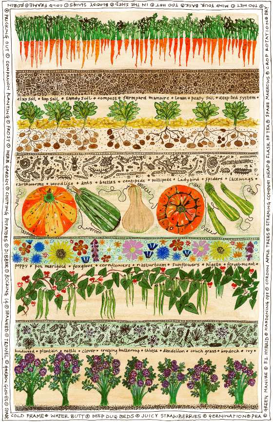 Fiona willis artwork for Veggie patch design